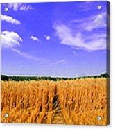 Sky Over The Field 3 Ae  Acrylic Print