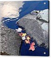 Sky Reflection Leaves And Rocks Acrylic Print