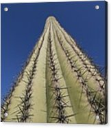 Skyward View Of A Saguaro Cactus Acrylic Print