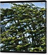 Slanted Branches Acrylic Print