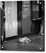 Sleeping Dog Acrylic Print