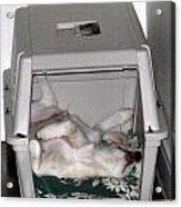Sleeping In The Dog House Acrylic Print