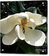Sleepy Head Magnolia Acrylic Print
