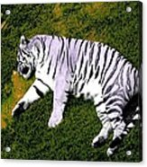 Sleepy Tiger 2 Acrylic Print