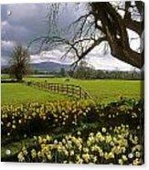 Slievenamon, Ardsallagh, Co Tipperary Acrylic Print