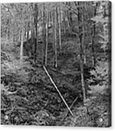 Slovenian Forest In Black And White Acrylic Print
