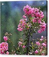 Slow Rain Acrylic Print