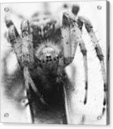 Small Alberta Spider Acrylic Print