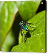 Small Green Fly Acrylic Print