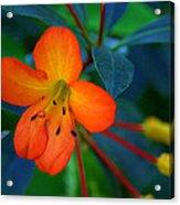 Small Orange Flower Acrylic Print