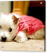 Small Puppy Sleeping On Mat Acrylic Print