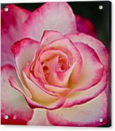 Smell The Roses Acrylic Print