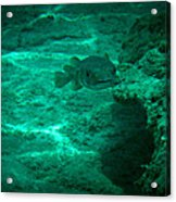 Smiling Fish Acrylic Print by Kimberly Perry