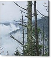 Smokey Mountain Forest No.612 Acrylic Print
