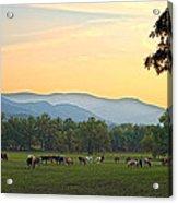 Smoky Mountain Horse Herd Acrylic Print