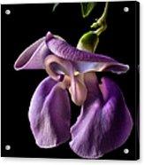 Snail Flower Acrylic Print