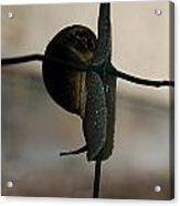 Snail On The Fence Acrylic Print