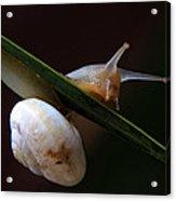 Snail Acrylic Print by Stelios Kleanthous