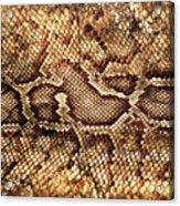 Snake Skin Acrylic Print by Abner Merchan