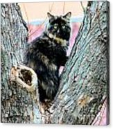 Snickers Caught In The Act Acrylic Print by Cheryl Poland