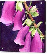Snoqualmie Dew Acrylic Print