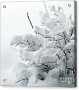 Snow Abstract 2 Acrylic Print