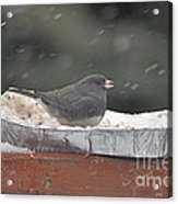 Snow Bird Acrylic Print