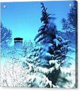 Snow Bow Acrylic Print
