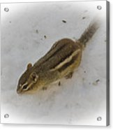 Snow Covered Chippy Acrylic Print