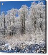 Snow Covered Maple Trees Iron Hill Acrylic Print