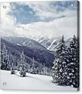 Snow Covered Pine Trees On Mountain Acrylic Print
