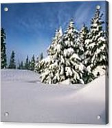 Snow Covered Trees In The Oregon Acrylic Print by Natural Selection Craig Tuttle