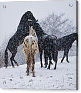 Snow Day I Acrylic Print by Betsy Knapp