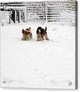 Snow Day Play II Acrylic Print