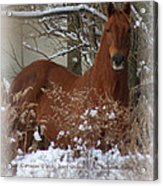 Snow Dreams Acrylic Print