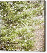 Snow Falling In Front Of Pines Acrylic Print