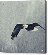 Snow Flight Acrylic Print