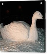 Snow Goose Sitting In Snow Acrylic Print