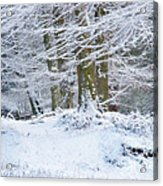 Snow Magic Acrylic Print