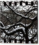 Snow On Branches Acrylic Print