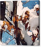 Snow On The Fall Leaves Acrylic Print
