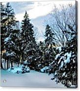 Snow Pines Acrylic Print