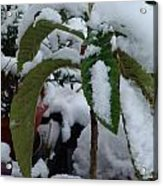 Snow Plant Acrylic Print