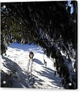 Snow Trail-under The Boughs Acrylic Print