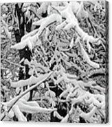 Snow Trees Acrylic Print