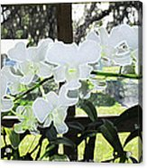 Snow White Orchid On The Water Accented Fx  Acrylic Print