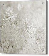 Snowflake In White Acrylic Print