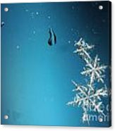 Snowflakes On My Window Acrylic Print