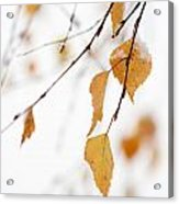 Snowing In Autumn Acrylic Print
