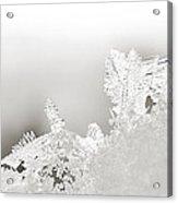 Snowland Bw Acrylic Print